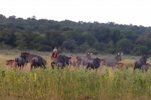 Volunteer with horses at Out in Africa Encounters